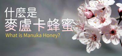 甚麼是麥盧卡蜂蜜? What is Manuka Honey?